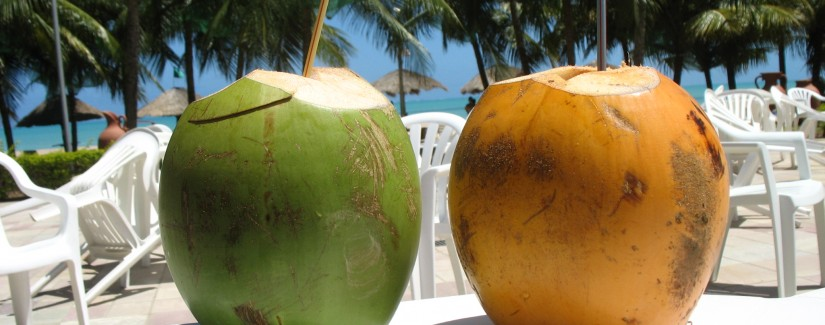Água de coco é a bebida do verão