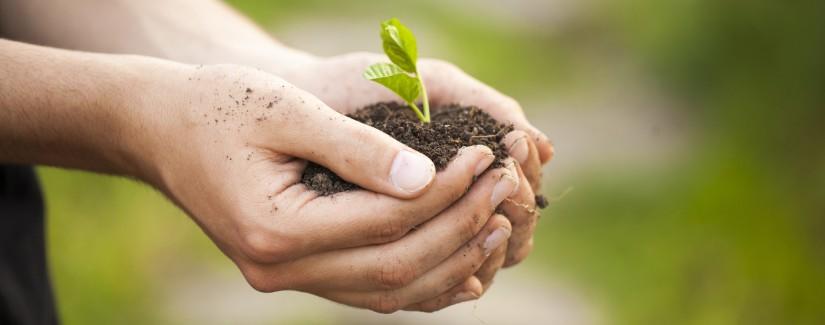 Obreira o que tem plantado?