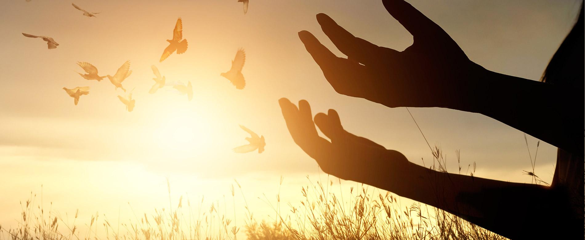 140 – 74º Dia | Ser O Testemunho