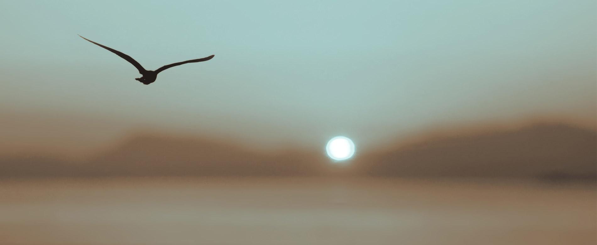 117 – 51º Dia | Ser O Testemunho